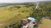 Бали : agricultural land and rice fields in Asia. aerial view farmland with rice terrace agricultural crops in countryside Indonesia, Bali. Стоковые видеозаписи
