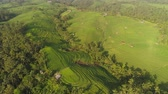 декорации : rice terrace and agricultural land with crops. aerial view farmland with rice fields agricultural crops in countryside Indonesia,Bali Стоковые видеозаписи