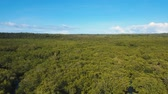 water plant : aerial footage mangrove tree forest and river Mangrove jungles, trees, river. Mangrove landscape. Philippines. Stock Footage