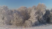 field ice : aerial view winter landscape trees covered with snow in countryside. winter forest on sunny day.