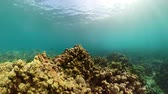 koraal : coral reef and tropical fish. underwater world diving and snorkeling on coral reef. Hard and soft corals underwater landscape