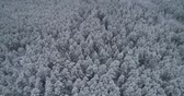 metragem : Aerial view: winter forest. Snowy tree branch in a view of the winter forest. Winter landscape, forest, trees covered with frost, snow. Aerial footage, 4K video.