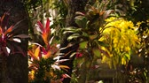 пышный : Lush foliage in tropical forest. tropical vegetation. Sun shining to the palm leaf in tropical forest