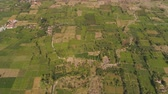 dohány : aerial view agricultural farmland with sown green,tobacco field in countryside. agricultural crops in rural area Java Indonesia. Land with grown plants of paddy