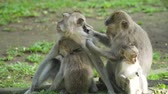 회귀선 : Monkey macaque in the rain forest. Monkeys in the natural environment. Bali, Indonesia. Long-tailed macaques, Macaca fascicularis