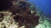 aquático : tropical fish and coral reef underwater world diving and snorkeling on coral reef. Hard and soft corals underwater landscape