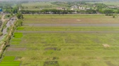 çiftçilik : aerial view agricultural land with sown green, rice fields in countryside. farmland with agricultural crops in rural areas Java Indonesia. Land with grown plants of paddy Aerial footage.