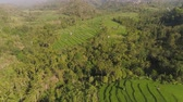 tropikal : green rice terraces, fields and agricultural land with crops. aerial view farmland with rice terrace agricultural crops in countryside Indonesia,Bali