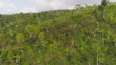 növényzet : tropical forest on mountain slopes. aerial view rainforest in Indonesia. tropical forest with green, lush vegetation. aerial footage Stock mozgókép