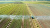 salata : Aerial view: Irrigation equipment watering cabbage field. Irrigation system watering farm field, 4K, aerial footage. Stok Video