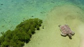 instalação : Sandy island with sand bar surrounded by coral reef and blue sea in honda bay, aerial drone. Coral atoll with installation of a sea turtle on sandy beach. Summer and travel vacation concept, Philippines, Palawan