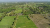 palmeiras : tropical landscape rice fields, palm trees, agricultural land, mountains in countryside. aerial view farmland with agricultural crops in rural areas Java Indonesia Aerial footage.