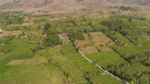 çiftçilik : aerial view agricultural farmland with sown green,corn, tobacco field in countryside. agricultural crops in rural area Java Indonesia. Land with grown plants of paddy Stok Video