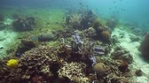 explorar : Tropical fishes and coral reef, underwater footage. Seascape under water. Camiguin, Philippines.