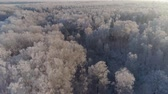 fedő : aerial view winter landscape forest covered snow, frost. Frozen branches with hoarfrost in winter forest on sunny day