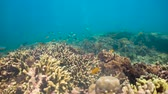 objevit : Coral reef underwater with fishes and marine life. Coral reef and tropical fish. Camiguin, Philippines.