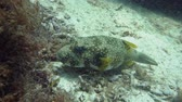 underwater video : Green sea turtle underwater in the natural environment. Wonderful and beautiful underwater world.