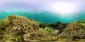 soft coral : Beautiful underwater landscape with tropical fishes and corals 360VR. Life coral reef. Camiguin, Philippines.