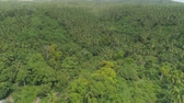 palmeras : Aerial view grove of palm trees in the hills against sky and clouds. Hills covered with green vegetation and coconut palms. Philippines, Luzon. Archivo de Video