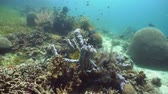 explorar : Beautiful underwater landscape with tropical fishes and corals. Life coral reef. Camiguin, Philippines.