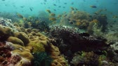 felfedezés : Coral reef underwater with fishes and marine life. Coral reef and tropical fish. Camiguin, Philippines.