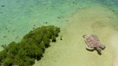 enseada : Tropical island with sand bar surrounded by coral reef and blue sea in honda bay, aerial view. Coral atoll with installation of a sea turtle on sandy beach. Summer and travel vacation concept, Philippines, Palawan