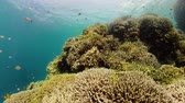 aquático : Coral reef and tropical fishes. The underwater world of the Philippines.
