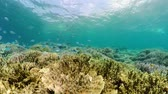 cay : Coral reef underwater with tropical fish. Hard and soft corals, underwater landscape. Travel vacation concept
