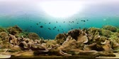 sanal : Tropical Fishes on Coral Reef, underwater scene. Camiguin, Philippines. Travel vacation concept