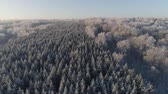 zima : aerial view winter landscape forest covered snow, frost. Frozen branches with hoarfrost in winter forest on sunny day