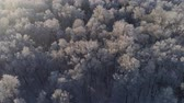 холодный : aerial view winter landscape forest covered snow, frost. Frozen branches with hoarfrost in winter forest on sunny day