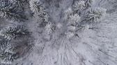 видео : Aerial view: winter forest. Snowy tree branch in a view of the winter forest. Winter landscape, forest, trees covered with frost, snow. Aerial footage, 4K video.