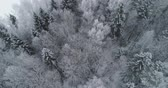 zasněžený : Aerial view: winter forest. Flight over snowy tree branch in view of the winter forest. Winter landscape, forest, trees covered with frost, snow. Aerial footage, 4K video.