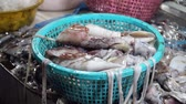 ahtapot : Fresh squids in a plastic basket for sale at a seafood market in the Philippines. Squids on a street market in Asia. Stok Video
