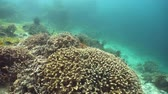 подводный : Coral reef and tropical fishes. The underwater world of the Philippines.