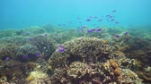aquático : Underwater fish reef marine. Tropical colorful underwater seascape with coral reef. Camiguin, Philippines.