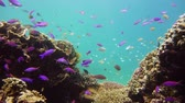 mergulho : Coral reef underwater with tropical fish. Hard and soft corals, underwater landscape. Travel vacation concept