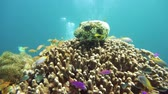 cay : Underwater Scene Coral Reef. Tropical underwater sea fishes. Camiguin, Philippines.