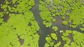 pântano : Aerial view of rivers in tropical mangrove forests. Mangrove landscape, Siargao,Philippines. Vídeos