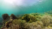 rif : Beautiful underwater landscape with tropical fishes and corals. Life coral reef. Camiguin, Philippines.