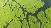 view from above : Mangrove trees in the water on a tropical island. An ecosystem in the Philippines, a mangrove forest. Stock Footage