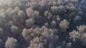 scénický : aerial view forest covered snow, frost. Frozen branches with hoarfrost in winter forest on sunny day winter landscape