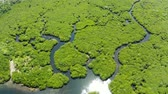 pantanal : Aerial panoramic mangrove forest view in Siargao island,Philippines. Mangrove landscape