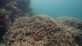šnorchl : Tropical fishes and coral reef, underwater footage. Seascape under water. Camiguin, Philippines.