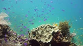 plavání : Beautiful underwater landscape with tropical fishes and corals. Life coral reef. Camiguin, Philippines.