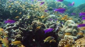 šnorchl : Tropical Fishes on Coral Reef, underwater scene. Camiguin, Philippines. Travel vacation concept