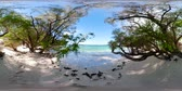 scénický : Wild sandy beach on tropical island with palm trees. vr360. Malcapuya, Philippines, Palawan. Tropical landscape with lagoon