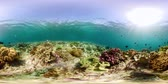 šnorchl : Tropical fishes and coral reef, underwater footage 360VR. Seascape under water. Camiguin, Philippines.