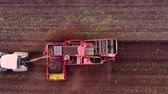 pole : Aerial view of Beet harvester on agricultural land is harvesting sugar beets.