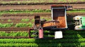 pole : Tractor with a carrot harvester on agricultural land. Aerial view of Harvesting Carrots.